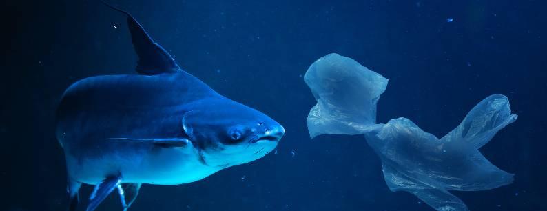 Pesci e plastica