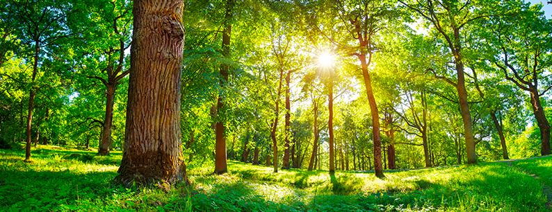 importanza tema ambientale giornata ambiente