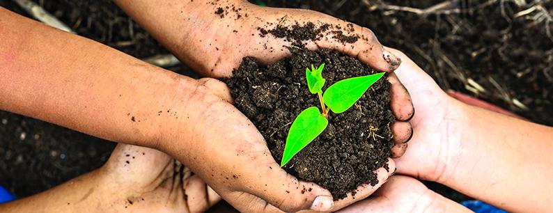 Giornata mondiale ambiente quando si celebra