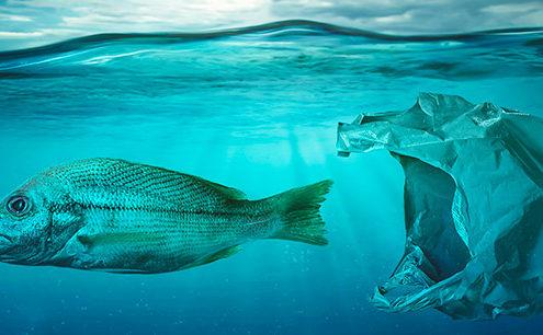 l'inquinamento del mare da plastica