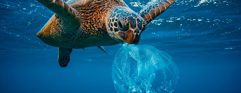 le sostanze tossiche e la plastica che inquinano i nostri mari