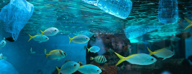 Le microplastiche nel Mare Tirreno