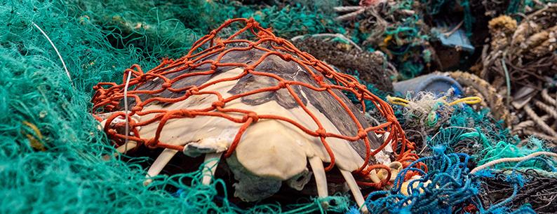 La pulizia dell'isola di plastica è stata effettuata dall'Ocean Voyage Institute