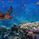 RIqualificare i mari per un ambiente più pulito