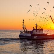 Il nuovo decreto salvamare responsabilizza i pescatori