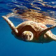 Tartaruga e oceano